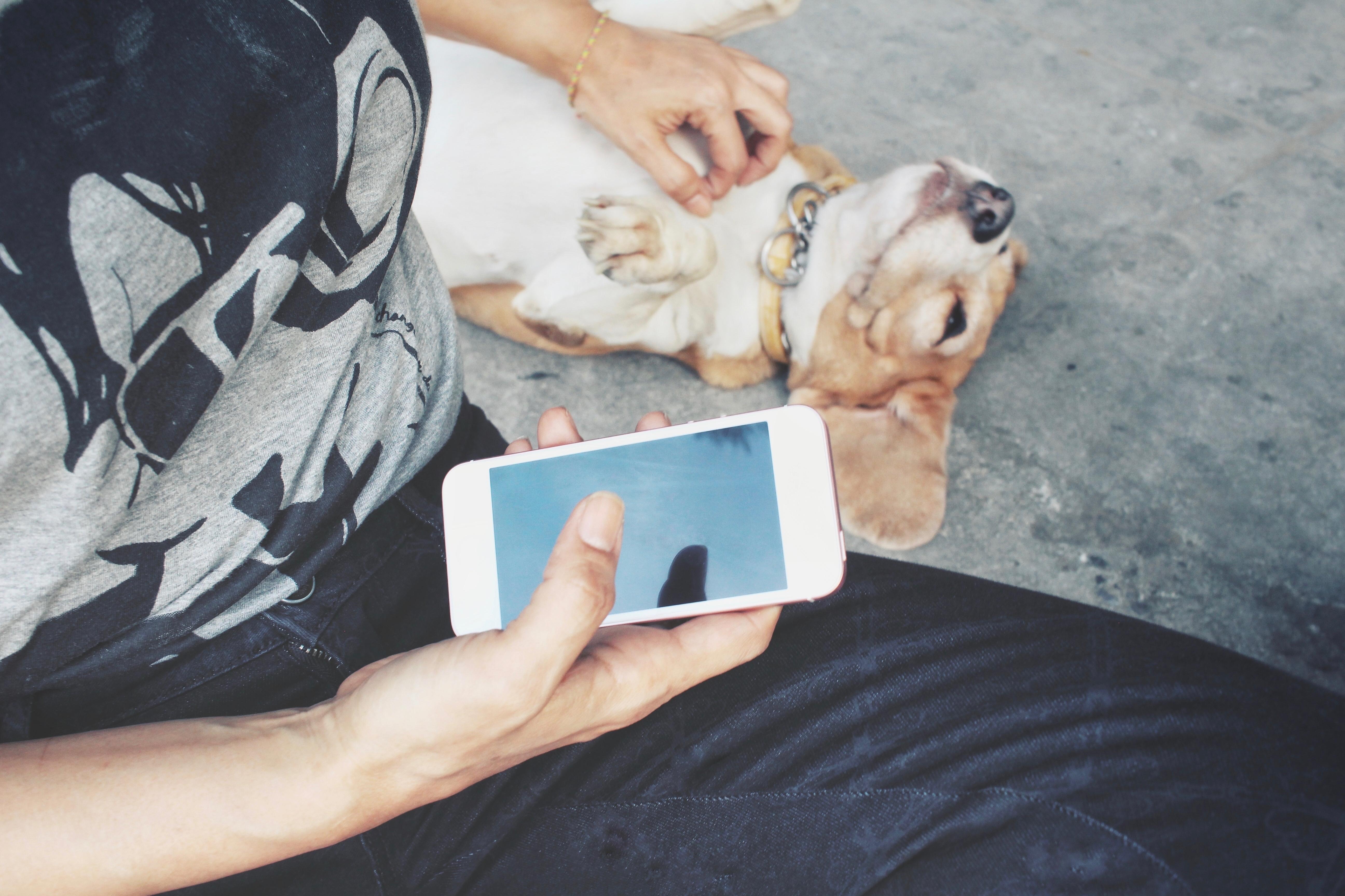 doggo friend